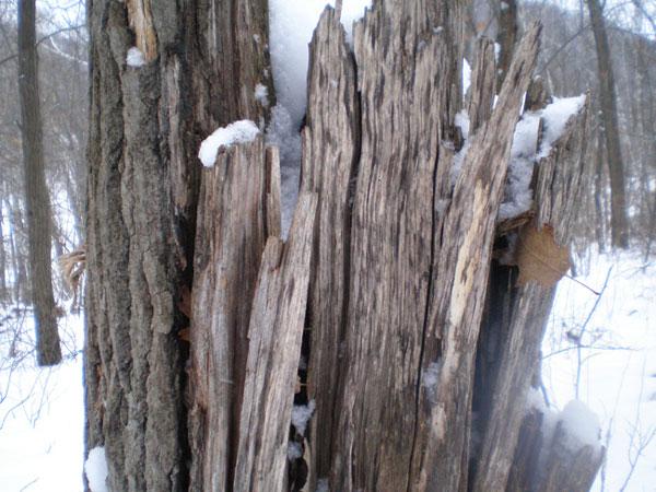 aluminum finish inspiration stump
